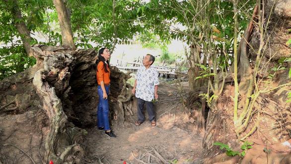 An Giang: 3 cây bằng lăng hơn 300 tuổi thành Cây di sản Việt Nam - Ảnh 2.
