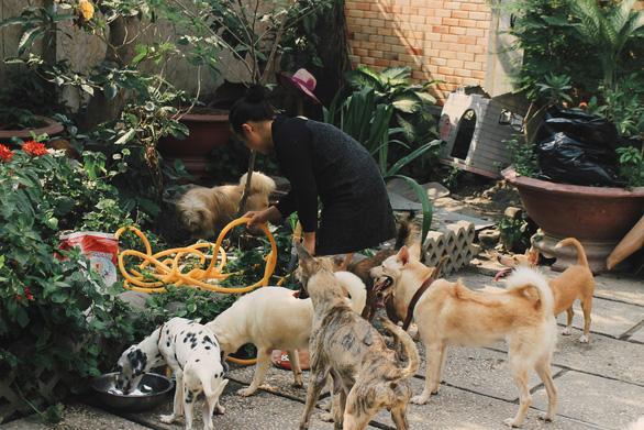 Cô gái 9X làm mẹ của hơn 100 chó mèo hoang - Ảnh 9.