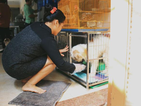 Cô gái 9X làm mẹ của hơn 100 chó mèo hoang - Ảnh 2.