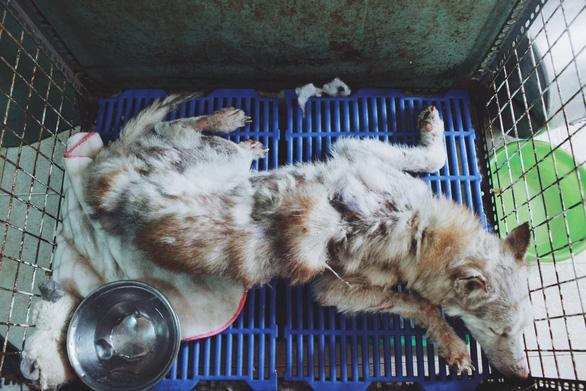 Cô gái 9X làm mẹ của hơn 100 chó mèo hoang - Ảnh 4.