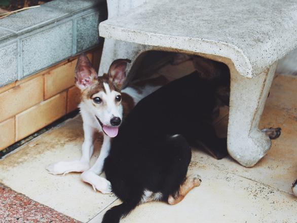 Cô gái 9X làm mẹ của hơn 100 chó mèo hoang - Ảnh 5.