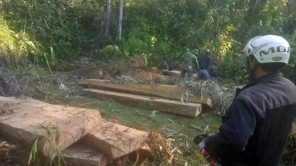 Điều tra đoàn xe độ chở gỗ lậu ra khỏi rừng - Ảnh 1.