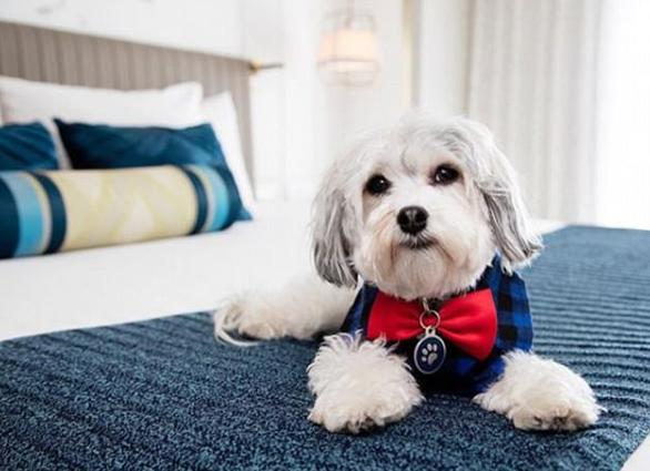 Khách sạn Mỹ cho mượn chó cưng để giải sầu - Ảnh 1.