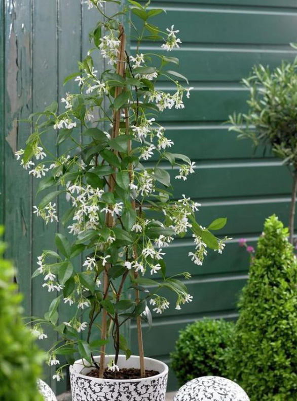 Nhà rực rỡ xanh mát nhờ các giàn hoa leo - Ảnh 2.