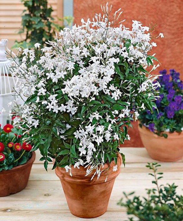 Nhà rực rỡ xanh mát nhờ các giàn hoa leo - Ảnh 5.