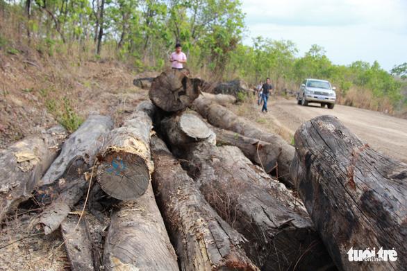 Đình chỉ công tác 4 sĩ quan không phát hiện xe gỗ của Phượng râu - Ảnh 1.