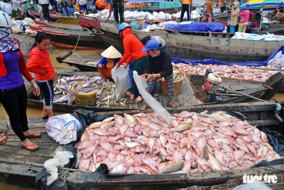 Hàng trăm tấn cá chết trắng bè, dân La Ngà khóc ròng - Ảnh 1.