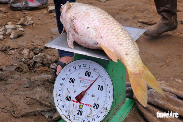 Hàng trăm tấn cá chết trắng bè, dân La Ngà khóc ròng - Ảnh 8.
