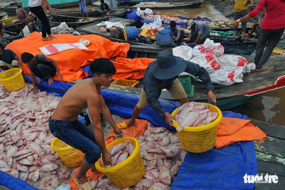 Hàng trăm tấn cá chết trắng bè, dân La Ngà khóc ròng - Ảnh 2.