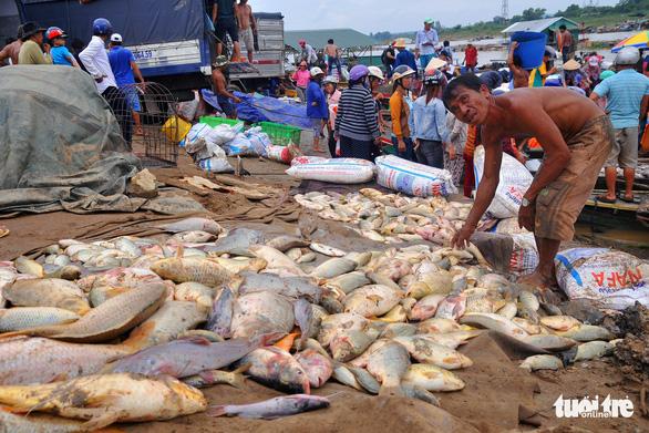 Hàng trăm tấn cá chết trắng bè, dân La Ngà khóc ròng - Ảnh 5.