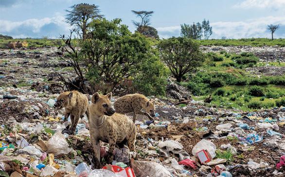 Ám ảnh vì thế giới ngập trong rác thải nhựa - Ảnh 11.