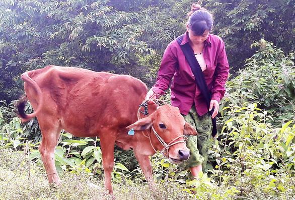 Nộp hơn 4 triệu, hộ nghèo được hỗ trợ bò… lở mồm long móng? - Ảnh 1.