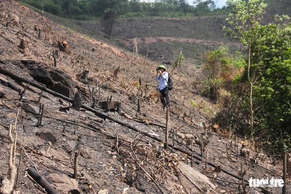8 ha rừng phòng hộ Quảng Ninh bị chặt trụi trước mặt kiểm lâm - Ảnh 7.