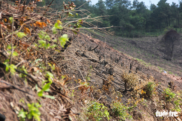 Xử lý nghiêm vụ chặt phá rừng phòng hộ ở Quảng Ninh - Ảnh 4.