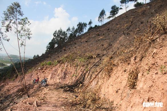 Xử lý nghiêm vụ chặt phá rừng phòng hộ ở Quảng Ninh - Ảnh 3.