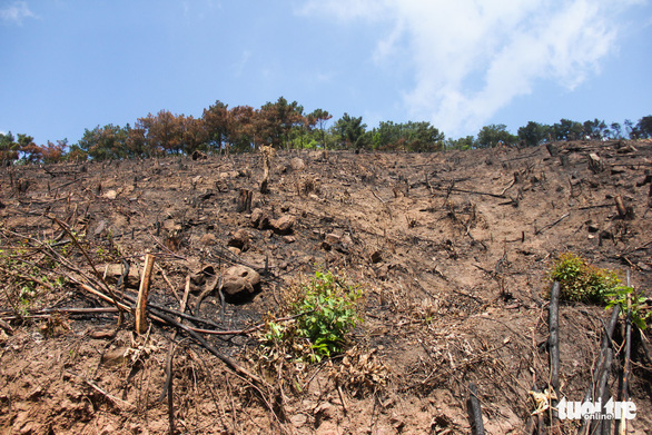 Xử lý nghiêm vụ chặt phá rừng phòng hộ ở Quảng Ninh - Ảnh 1.