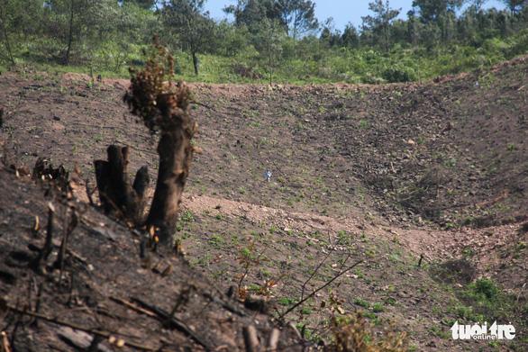 Xử lý nghiêm vụ chặt phá rừng phòng hộ ở Quảng Ninh - Ảnh 2.