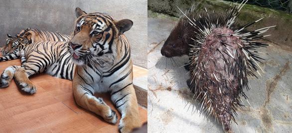 Khu du lịch thác Prenn Đà Lạt bị tố ngược đãi động vật - Ảnh 1.