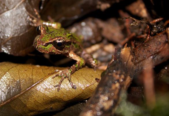 12 loài quý hiếm thoát số phận tuyệt chủng nhờ bảo tồn - Ảnh 1.