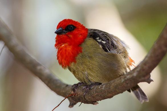 12 loài quý hiếm thoát số phận tuyệt chủng nhờ bảo tồn - Ảnh 11.