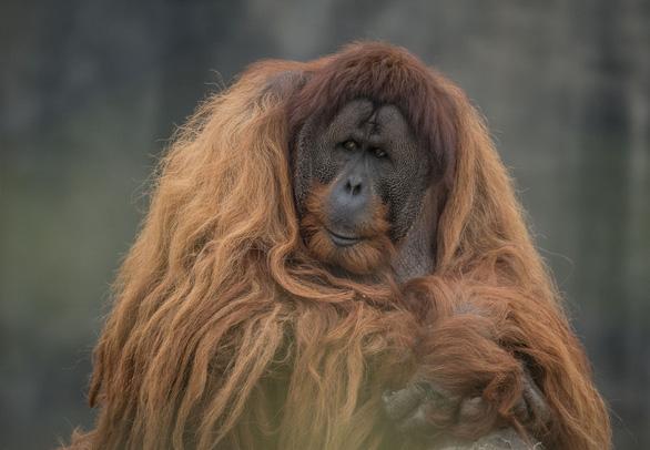 12 loài quý hiếm thoát số phận tuyệt chủng nhờ bảo tồn - Ảnh 4.