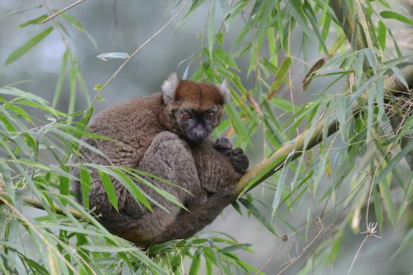 12 loài quý hiếm thoát số phận tuyệt chủng nhờ bảo tồn - Ảnh 5.