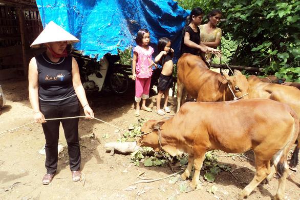 Hỗ trợ bò lở mồm long móng cho dân nghèo: huyện rút kinh nghiệm - Ảnh 1.