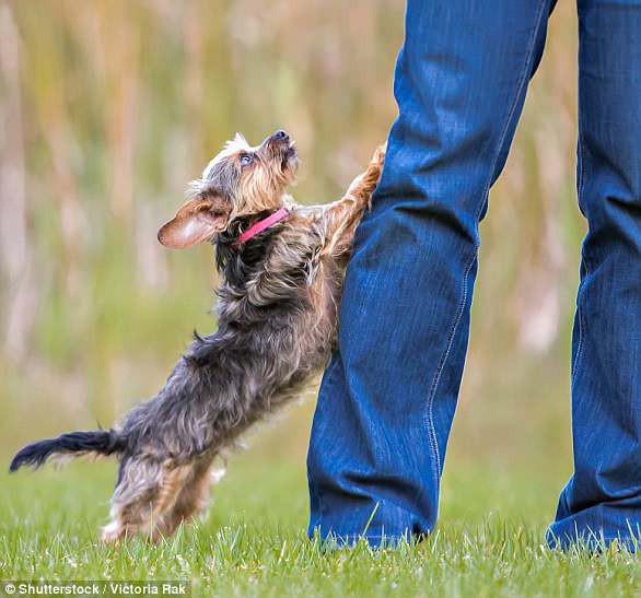 Giải mã ngôn ngữ cử chỉ những chú chó cưng - Ảnh 9.