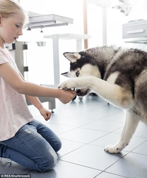 Giải mã ngôn ngữ cử chỉ những chú chó cưng - Ảnh 4.