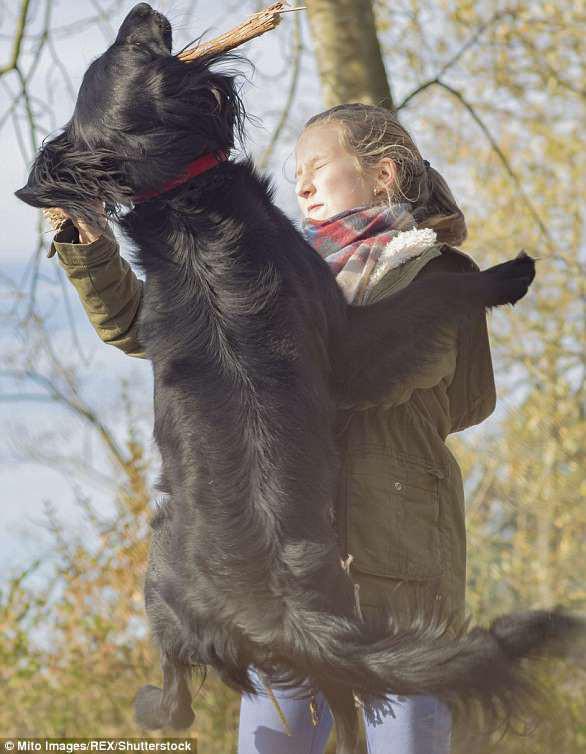 Giải mã ngôn ngữ cử chỉ những chú chó cưng - Ảnh 8.