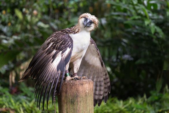 8 vườn thú tuyệt vời ở Đông Nam Á - Ảnh 3.