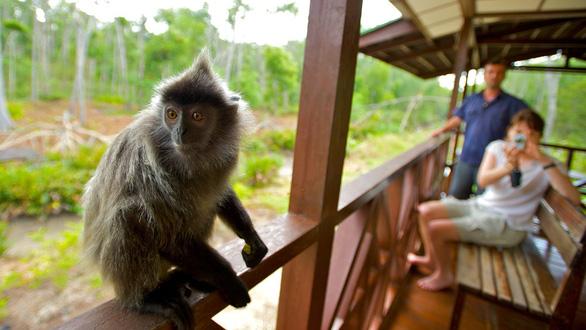 8 vườn thú tuyệt vời ở Đông Nam Á - Ảnh 5.