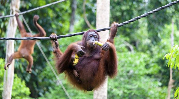 8 vườn thú tuyệt vời ở Đông Nam Á - Ảnh 4.