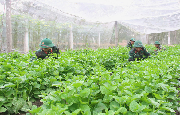 Vườn rau 11 tấn/năm tăng gia sản xuất của bộ đội  - Ảnh 1.
