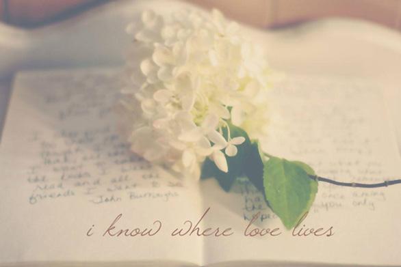 Khi cô đơn, bạn đừng quên đọc sách, hạnh phúc thực ra ở rất gần - Ảnh 3.