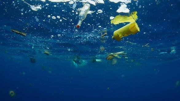 Vì sao động vật biển không thể ngừng ăn rác nhựa? - Ảnh 1.