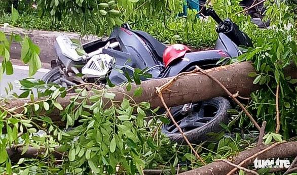 Ba người đi xe máy bị thương do cây xà cừ bật gốc - Ảnh 1.