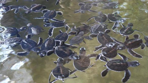 Đi Sri Lanka, Indonesia học bảo tồn rùa biển - Ảnh 6.