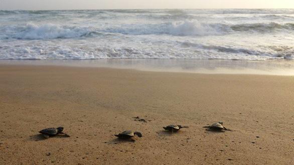 Đi Sri Lanka, Indonesia học bảo tồn rùa biển - Ảnh 4.