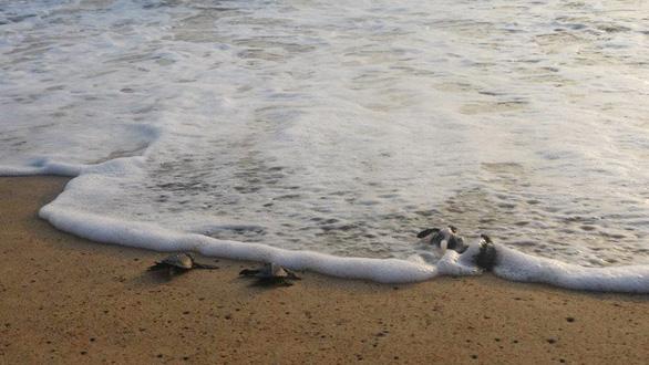 Đi Sri Lanka, Indonesia học bảo tồn rùa biển - Ảnh 9.
