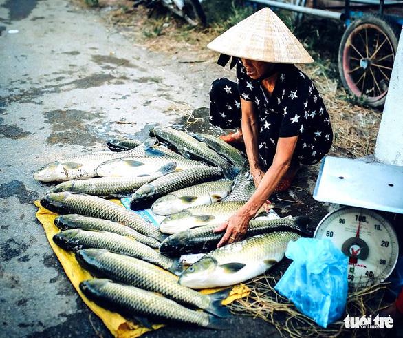 Hàng trăm lồng cá chết vì thủy điện không xả, nước sông Bồ không chảy - Ảnh 2.