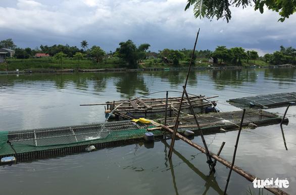 Hàng trăm lồng cá chết vì thủy điện không xả, nước sông Bồ không chảy - Ảnh 4.