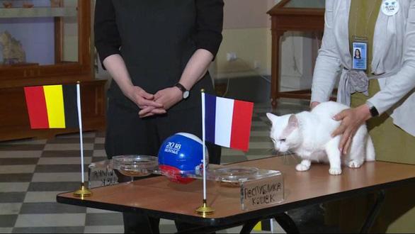 Heo vòi, lạc đà chọn Croatia, bạch tuộc, vẹt tin Pháp sẽ đoạt Cup - Ảnh 6.