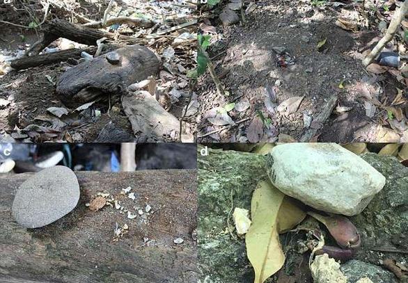 Clip khỉ dùng đá làm công cụ thành thục như người - Ảnh 4.