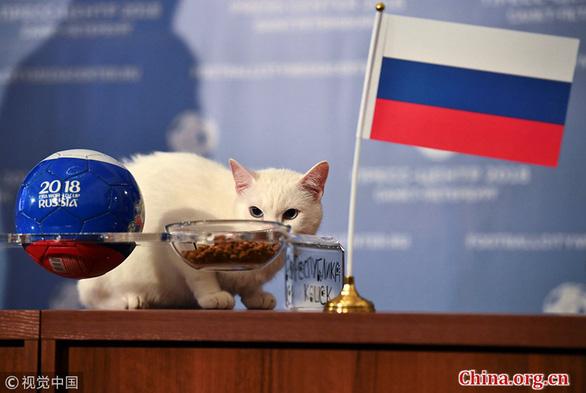 Fan Trung Quốc đau buồn vì tiên tri World Cup mèo hoàng đế qua đời - Ảnh 6.