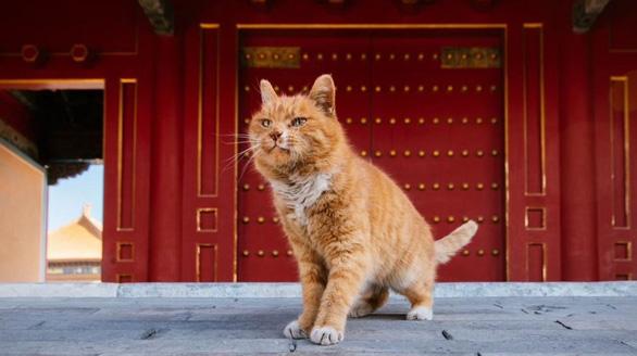 Fan Trung Quốc đau buồn vì tiên tri World Cup mèo hoàng đế qua đời - Ảnh 3.
