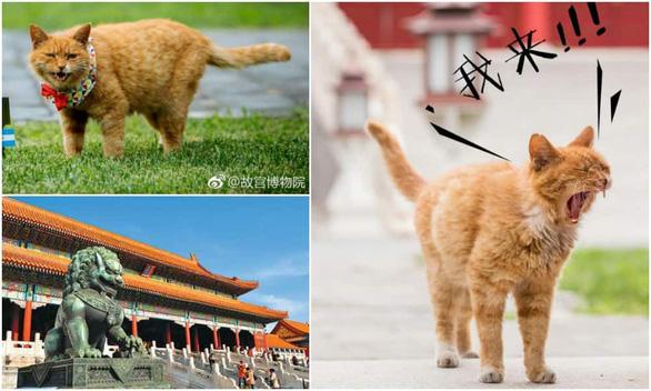 Fan Trung Quốc đau buồn vì tiên tri World Cup mèo hoàng đế qua đời - Ảnh 5.