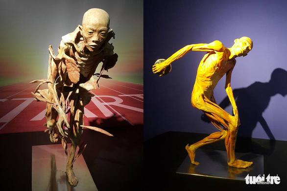 Bộ Văn hóa yêu cầu báo cáo về triển lãm nội tạng và cơ thể người - Ảnh 5.
