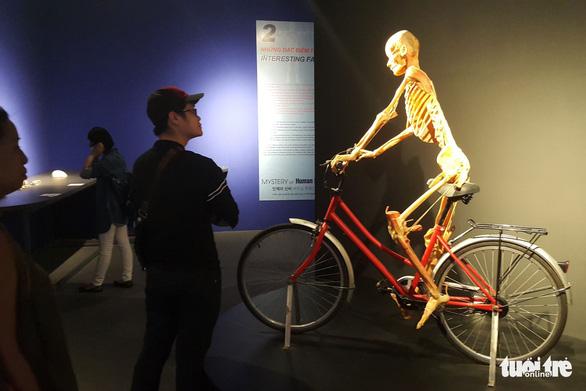 Bộ Văn hóa yêu cầu báo cáo về triển lãm nội tạng và cơ thể người - Ảnh 2.