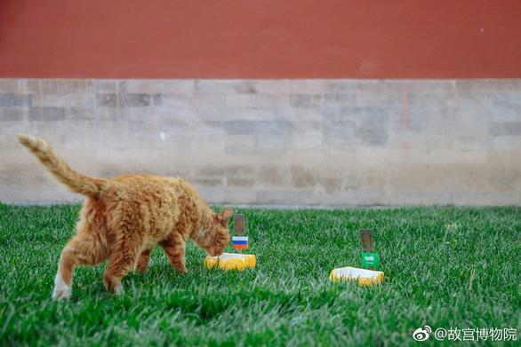 Fan Trung Quốc đau buồn vì tiên tri World Cup mèo hoàng đế qua đời - Ảnh 2.